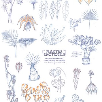 Planche-Plantes-exotiques